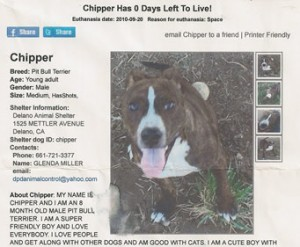 Chipper Notice