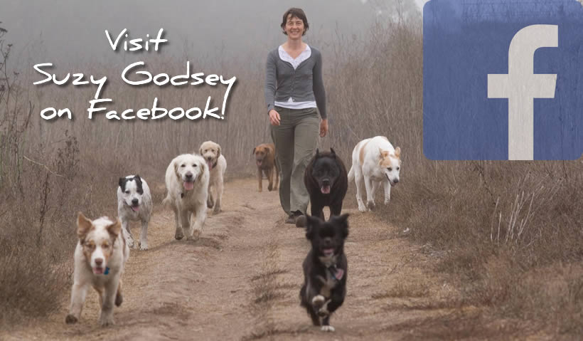 Visit Suzy Godsey on Facebook