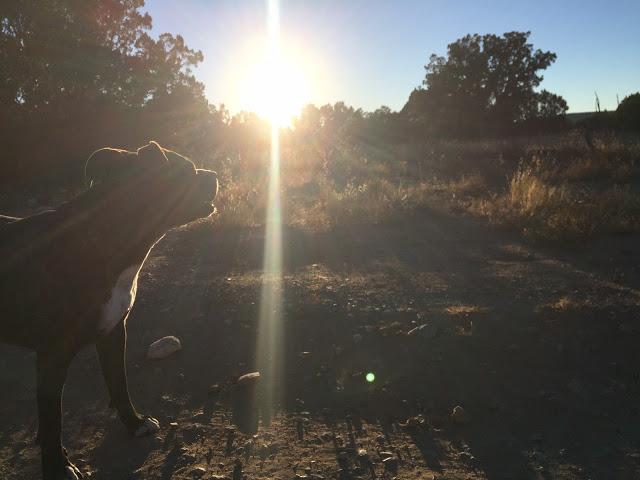 Charlies Yes Dog Blog